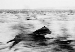 © John Divola — Dogs chasing my car in the desert